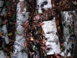 wood texture 2 by Mortifiera