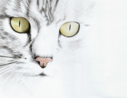 Cat face by sue1993