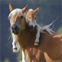 A Mare and her Foal by HorrorFan6
