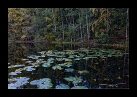 autumn waterscape VI by OrisTheDog