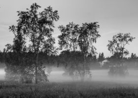 Surrounded by Mist by Toni-R