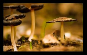 micro world WP version by MrVERTIGO