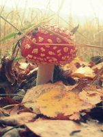 Toadstool 5 by Trucina
