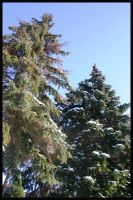 Evergreens by Nariane