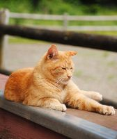 Barn Cat by SilverblueCat