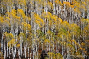 Aspen pattern by porbital