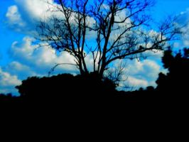 Black Tree by FAM-CREATIONS
