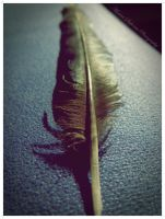 Feather by moonik9