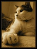 120 by evy-and-cats