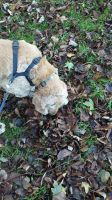 buster playing in leaves by beckypeters