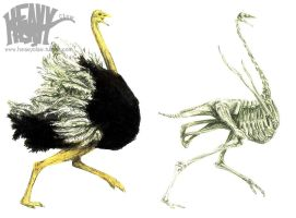 Ostrich and his Skeleton by HeavyClaw