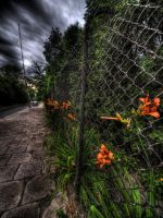 Flowers by kubica
