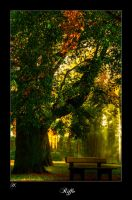 Autumn Tree by Riffo