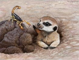 Meerkat Pup and Scorpion, breakfast on the go by Psithyrus
