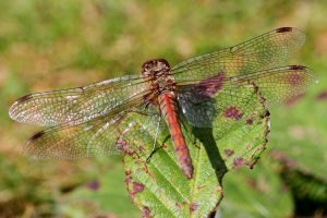 Wire framed wings by Cantabrigian