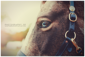Day 166 - The Traveler by MonsterBrand