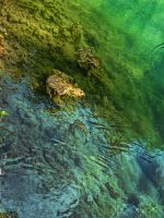 Green Water by MedaGritzko