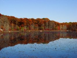 Fall Reflections... by TriciaStucenski