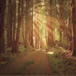 Sunlit Woods Stock by little-spacey