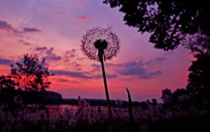 Pusteblume by Mo-Photographer