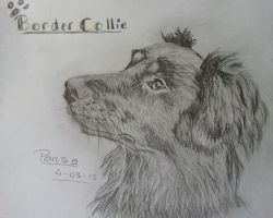 Border Collie (better spelling) by dailybunny