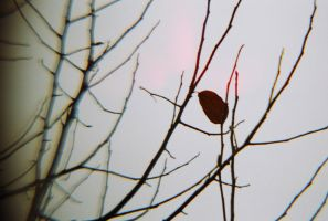 last leaf left by agent-86