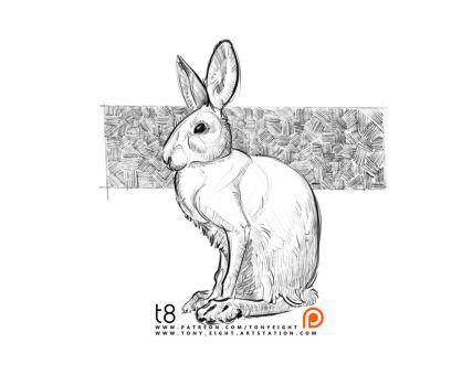 Patreon - Rabbit Sketch 03 by T-Eight