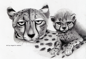 Cheetahs by Duchess-of-Dismal