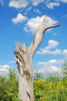 Stump and Sky by jrbamberg
