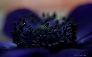 In the midlle of blue... by AgataSwat