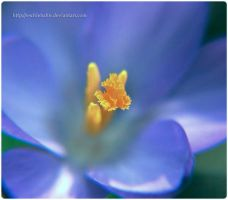 Spring Blues by eschlehahn