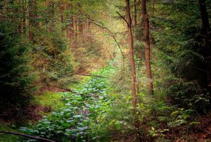 my fairytale forest by Iridescent-happinesS