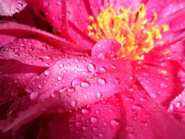raindrops on a flower by VampireGirl444
