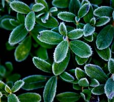 Frosty Green by JoniNiemela
