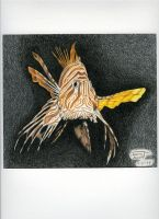 Lionfish by Thomgirl