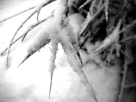 Snow on plant by Atheena