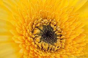 Yellow Flower part 2 by EvanXethTideswell