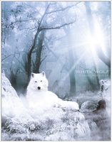 White wolf II by RazielMB