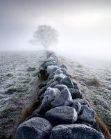 Frosty Morning by TristanCampbell