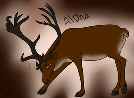 Alpha by KIING-LACURA