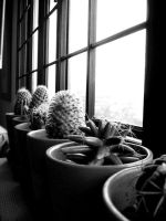 and more cactus by mR-StIck