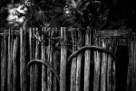 Vine Fence by sting-ray