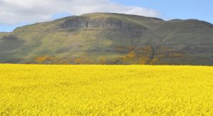 Sea of Yellow by F16CrewChief