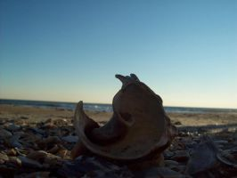 Curly Shell by bgbeachgurl