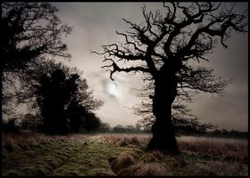 Silhouetted Oak by grimleyfiendish