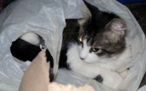 charlie in a grocery bag by analovecatdog
