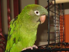 My Parrot by dafna14495