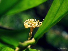 Tangled by Vishw