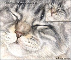 Maine Coon enlarged detail by chipset