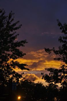 Sunset-tree 0035 by akio-stock